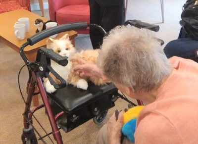 TDC Brighton Animal Magic Dementia Cafe Coldean